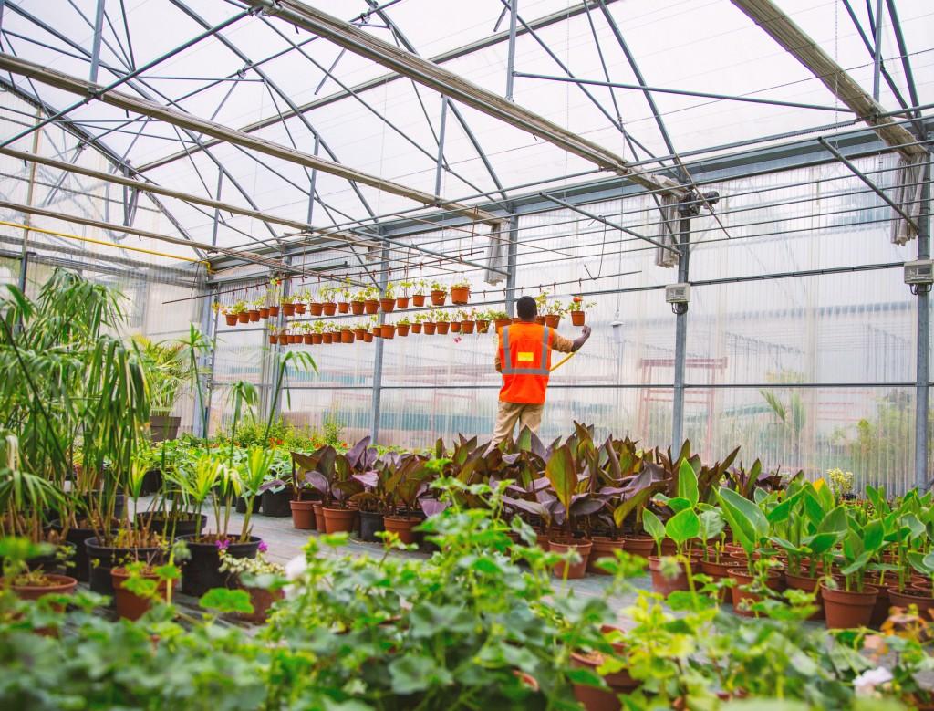 Parmi les 24 agents des espaces verts, deux travaillent dans les serres. Ils ont pour mission de stocker et d'entretenir les plantes pendant l'hiver, afin de pouvoir les remettre en terre l'année suivante.