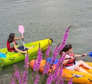 canoe kayak vernon transat