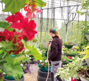 Le défi pour les jardiniers ? Une fleurissement naturel qui décore toute l'année, quelle que soit la météo.