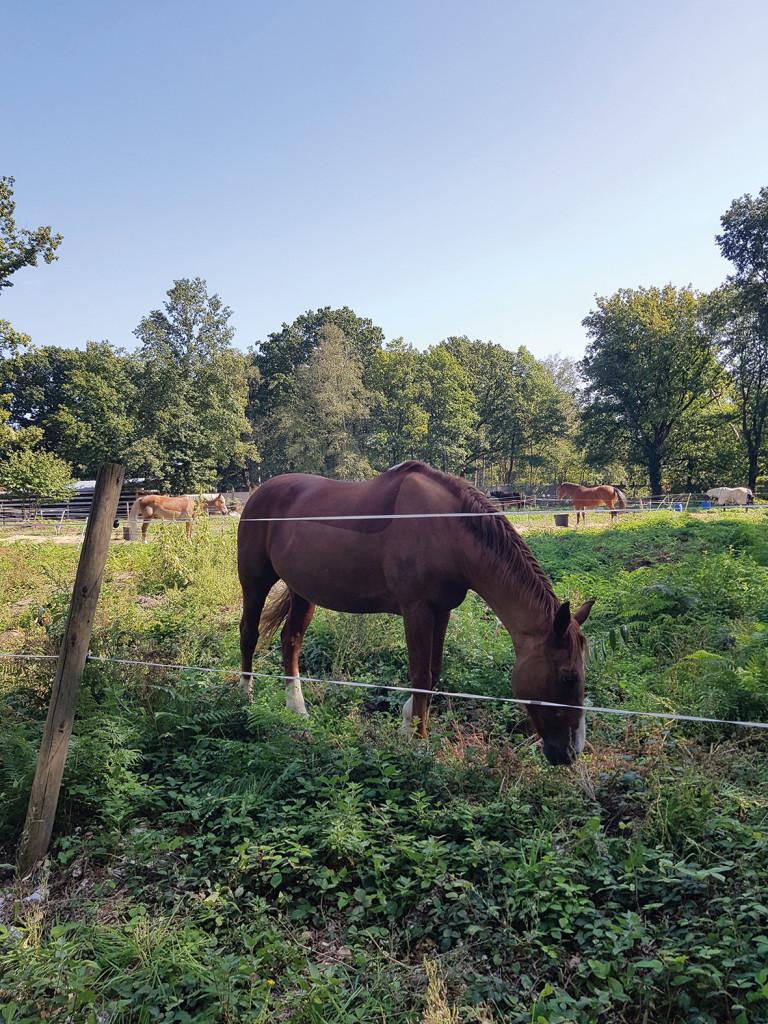 La police protège les chevaux