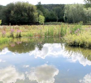 Département de l_Eure Préservation Mare Biodiversité Ecologie Nature