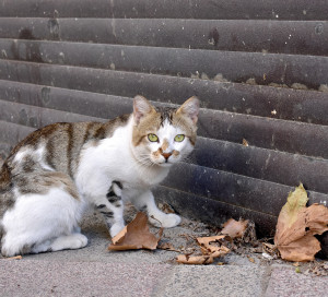 A lonely cat has white, black, green, brown feather.